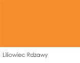 Liliowiec Rdzawy