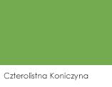 Czterolistna Koniczyna